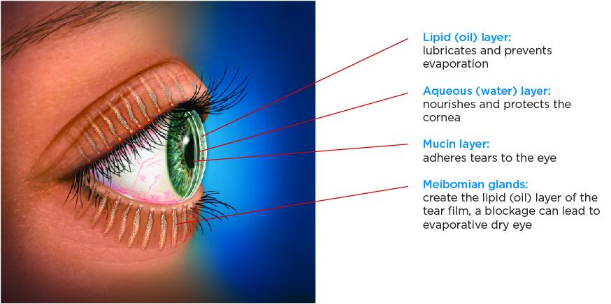 Tear Film Anatomy